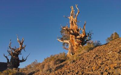 SIGMA DP1 Merrill • 19mm • f5 • ISO200 • Timeless Trees.jpg