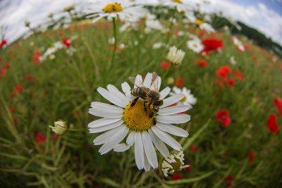 Biene mit Fish.jpg