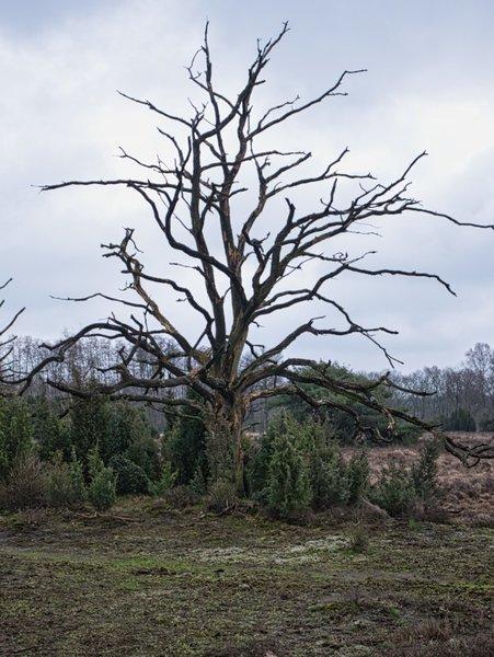 Buursersand-Baum.jpg