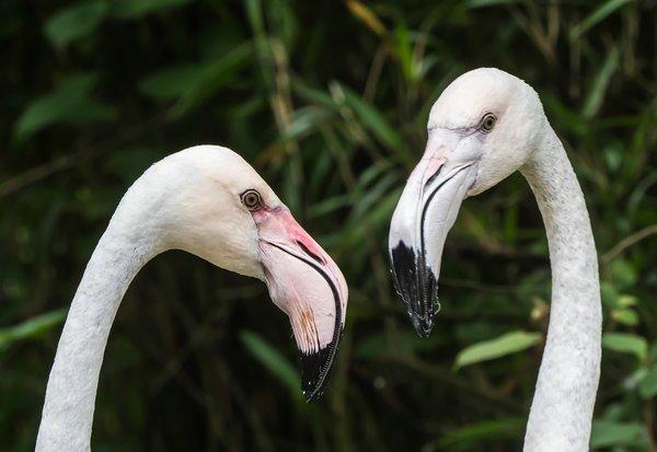 Baby Zoo Wingst13062020P6130004-Bearbeitet.jpg