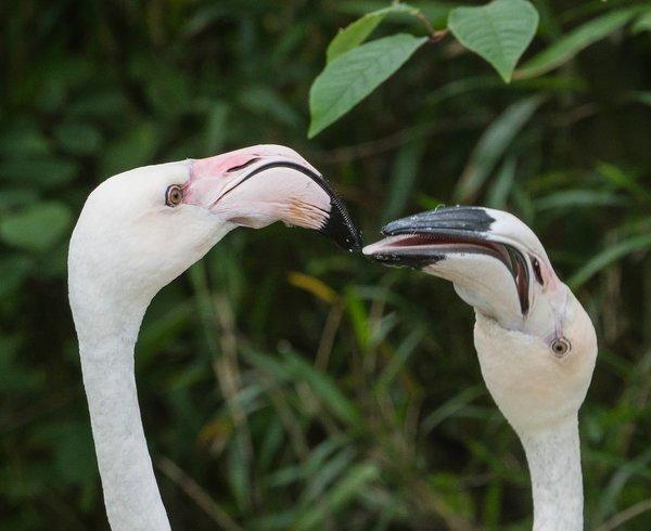Baby Zoo Wingst13062020P6130007-Bearbeitet.jpg