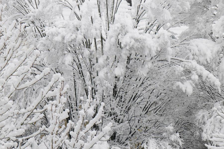 Schneebäumegegenüber#2SL22490SW_998x666.jpg