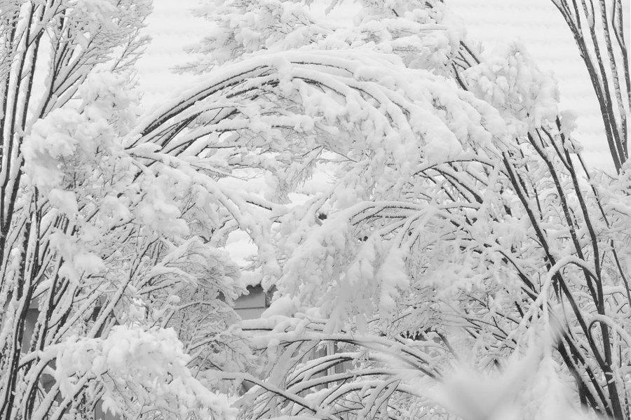 SchneegegenüberÄstegewirrSL290280SW_998x666.jpg